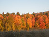 Some of the beautiful scenery in Sugar Hill, NH in the late fall.